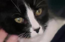 Mèo - Liệu pháp đặc biệt giúp học sinh Australia giảm căng thẳng trước kỳ thi