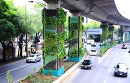 Giảm ô nhiễm môi trường với vườn thẳng đứng tại Mexico City