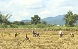 Nông dân miền Trung khó khăn chồng chất sau lũ