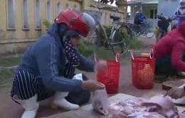 Quảng Bình: Lợn bị bệnh vẫn được cấp phép… giết mổ