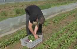 Trồng rau theo phương pháp bio, người dân Bỉ thu lợi nhuận lớn