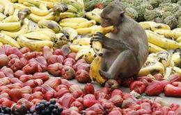 Tiệc buffet dành cho... khỉ ở Thái Lan