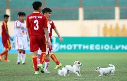 Chú chó làm loạn giải U19 QG - hình ảnh thể thao ấn tượng nhất tuần