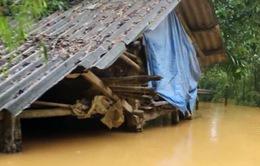 Mưa lũ gây thiệt hại nặng nề về nông nghiệp tại Hà Tĩnh