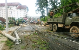 Hai cây thông ngã đổ gây ách tắc giao thông ở Đà Lạt