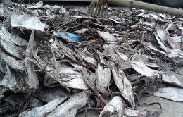 Thanh Hóa: Bắt giữ hơn 20 tấn mực bẩn