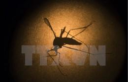 Mỹ thử nghiệm vaccine phòng ngừa virus Zika trên cơ thể người