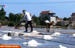 Diêm dân Sa Huỳnh chưa được hỗ trợ mua tạm trữ muối