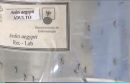 Các chuyên gia cảnh báo về sự lây truyền bệnh từ muỗi