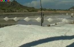 Tồn động hơn 85.000 tấn muối