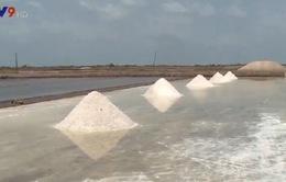 Tồn đọng lượng muối lớn, diêm dân thiếu vốn sản xuất muối trắng