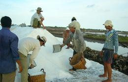 Bạc Liêu hỗ trợ 400 triệu đồng cho diêm dân trữ muối