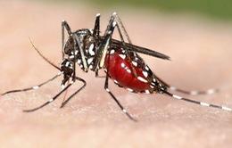 Bộ Y tế cảnh báo nguy cơ lây nhiễm bệnh do virus Zika
