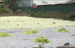 Hà Nội: Phát hiện cơ sở phơi nguyên liệu làm mứt cạnh... nhà vệ sinh