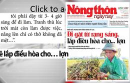 Nắng nóng kỷ lục: Người dân đi gặt từ rạng sáng, lắp điều hòa cho… lợn