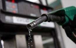 Giá dầu biến động trước thềm cuộc họp của OPEC
