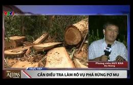 Có hay không việc tiếp tay cho lâm tặc phá rừng Pơ mu tại Nam Giang?