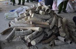 Việt Nam là nơi trung chuyển ngà voi quốc tế