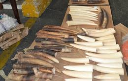 Thủ đoạn mới trong buôn lậu động vật hoang dã