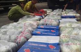 Nghệ An: Tiêu hủy hàng tấn rau quả nhập lậu từ Trung Quốc