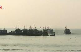 Ngư dân Đà Nẵng ra quân đánh bắt hải sản