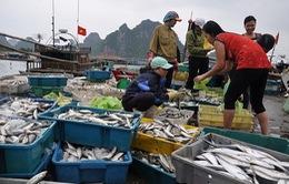 Quảng Trị chuẩn bị chi trả tiền bồi thường cho ngư dân