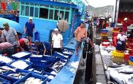 Giá xăng dầu giảm, ngư dân miền Trung mạnh dạn vươn khơi