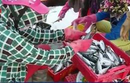 Thừa Thiên-Huế: Nhiều giải pháp hỗ trợ cho ngư dân