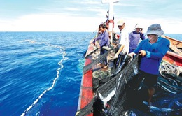 Ngư dân Quảng Ngãi mở biển sau những ngày đầu năm mới