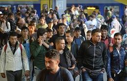 EC đề xuất cải cách quy định tị nạn