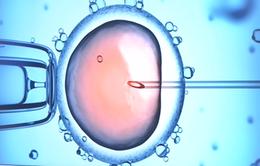 26 phụ nữ bị cấy nhầm tinh trùng tại Hà Lan