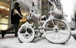 Tuyết rơi dày tại Nhật Bản gây thiệt hại nghiêm trọng