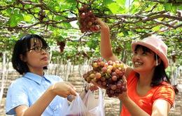 Bế mạc lễ hội Nho và Vang Ninh Thuận