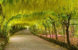 Những khu vườn xanh mướt đẹp nhất nước Anh