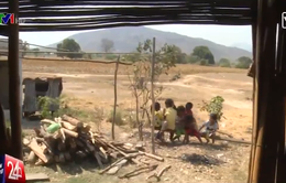 Nắng hạn kéo dài, cuộc sống của người dân Ninh Thuận khốn khó