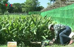 Myanmar ứng dụng công nghệ in 3D vào nông nghiệp