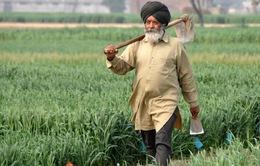 Ấn Độ cam kết chi hàng tỷ USD hỗ trợ nông dân nghèo
