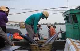 Nông, lâm, ngư nghiệp Thừa Thiên - Huế tăng trưởng âm