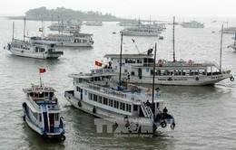 Đình chỉ tàu du lịch trên vịnh Hạ Long của DN nợ thuế kéo dài