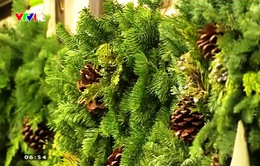 Sức hút của cây thông Noel truyền thống tại Mỹ