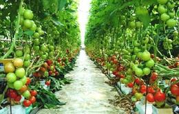 Cơ cấu sản xuất nông nghiệp sẽ thay đổi theo dân số