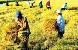 Sẽ có gói hỗ trợ 50.000 tỷ đồng cho nông nghiệp