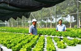 Nông nghiệp công nghệ cao thiếu nguồn nhân lực chất lượng