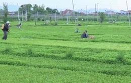 Phú Yên: Nâng cao nhận thức về nông nghiệp sạch cho nông dân