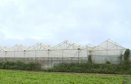 250 hộ kinh doanh được hỗ trợ sản xuất nông nghiệp sạch
