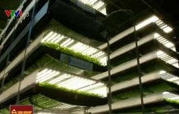 Độc đáo mô hình nông nghiệp trong nhà tại New Jersey, Mỹ