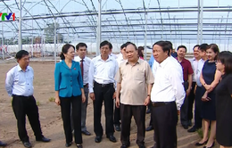 Hải Phòng cần mở rộng nông nghiệp kỹ thuật cao