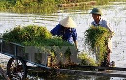 Tổng điều tra nông nghiệp, nông thôn và thủy sản