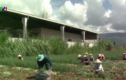 Tháo gỡ rào cản vốn đầu tư nông nghiệp công nghệ cao
