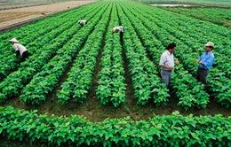 Việt Nam tham gia sáng kiến tầm nhìn mới trong nông nghiệp